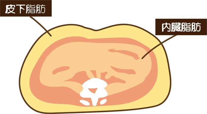 内臓脂肪レベルを9以下に!体重計でBMIを計算しよう
